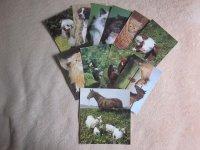 Pohlednice retro Domácí zvířata mix, 12ks